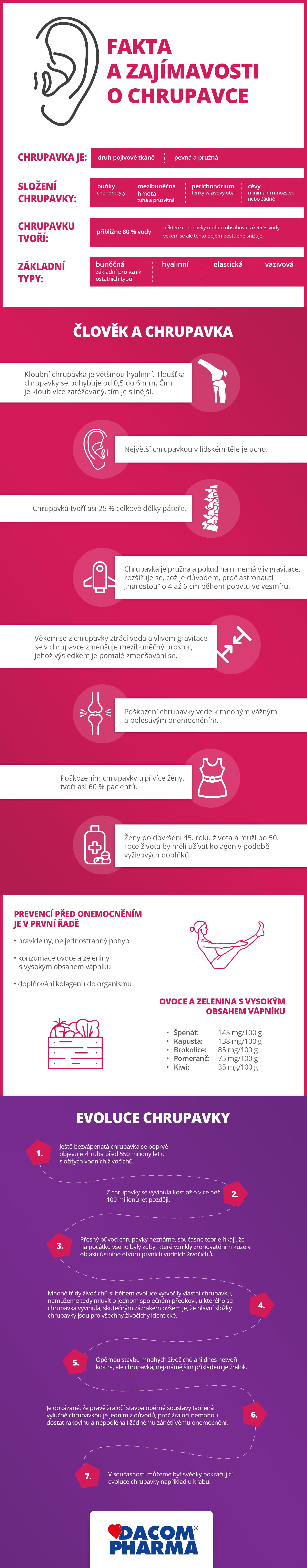 Infografika: chrupavka